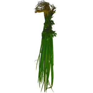 Bouquet garni pièce (cives persil thym)