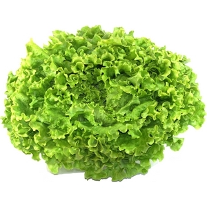 Salade verte batavia guadeloupe sachet