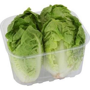 Salade verte sucrine la barquette